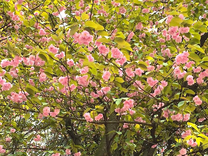 Ben arrivata primavera! Auguri a tutte le bambine!
